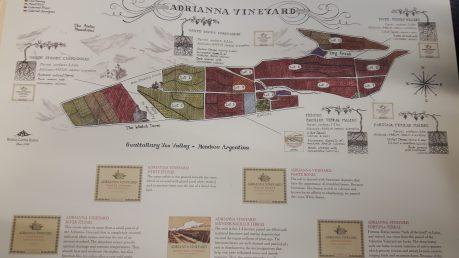 adrianna-vineyard